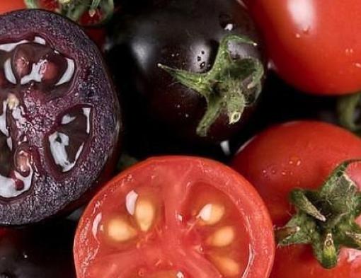 Tomates violetas